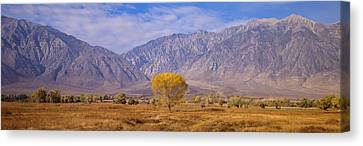 Autumn Color Along Highway 395, Sierra Canvas Print by Panoramic Images