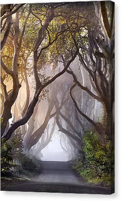Autumn Hedges Canvas Print by Stephen Emerson