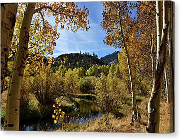 Canvas Print featuring the photograph Autumn In Bishop Creek by Dung Ma