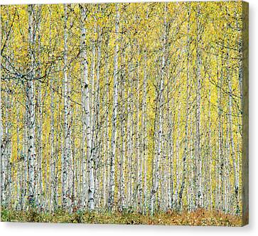 Canvas Print featuring the photograph Autumn Landscape by Vladimir Kholostykh