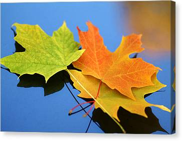Autumn Leaves - Foliage Canvas Print by Dmitriy Margolin