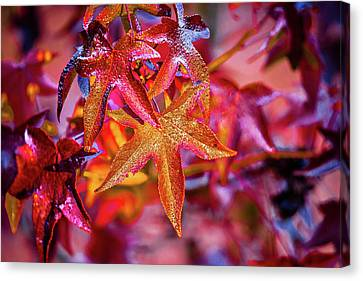 Autumn  Leaves Decorate A Beautiful Nature Bokeh Background With Canvas Print