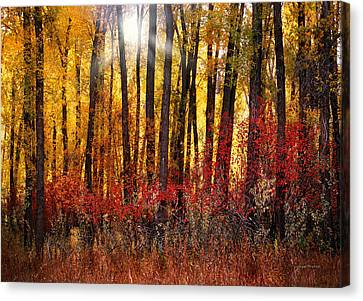 Cottonwood Canvas Print - Autumn Light by Leland D Howard