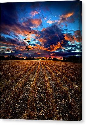 Autumn Rising Canvas Print by Phil Koch