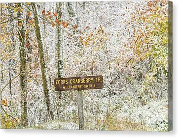 Autumn Snow Cranberry Wilderness Canvas Print