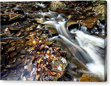 Autumn Upper Shavers Fork Preserve Canvas Print
