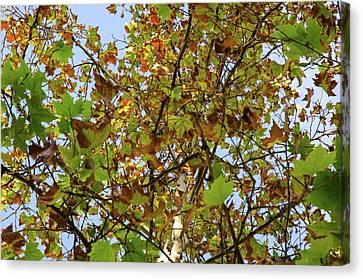 Natural Landscape Canvas Print - Autumn Whispers by Andrea Mazzocchetti