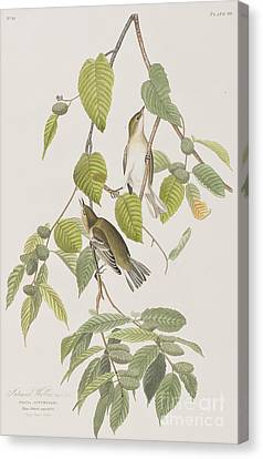 Autumnal Warbler Canvas Print by John James Audubon