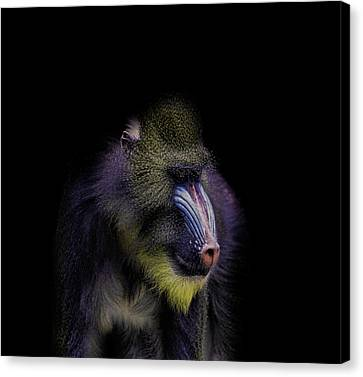 Baboon Portrait Canvas Print