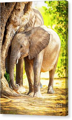 Baby Elephant In Africa Canvas Print by Tim Hester