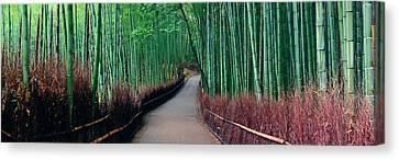 Bamboo Grove Canvas Print