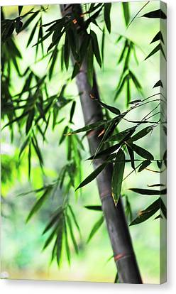 Bamboo Leaves Canvas Print by Jenny Rainbow