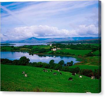 Bantry Bay, Co Cork, Ireland Canvas Print by The Irish Image Collection