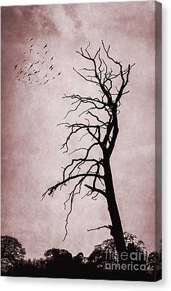 Bare Tree Canvas Print by Svetlana Sewell