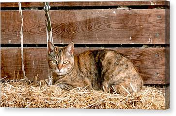 Portraits Canvas Print - Barn Cat by Jason Freedman