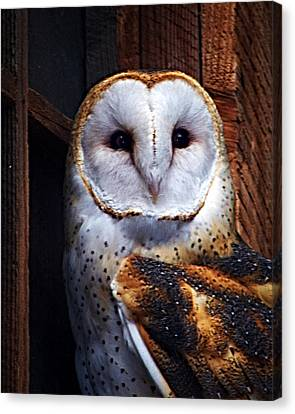 Barn Owl  Canvas Print by Anthony Jones