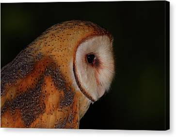 Barn Owl Profile Canvas Print