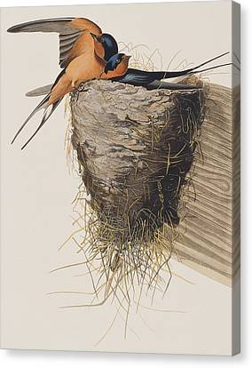 Barn Swallow Canvas Print by John James Audubon