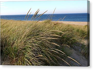 Beach Grass At Truro Canvas Print by Frank Russell