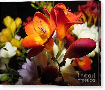 Beautiful Flowers Canvas Print by Joyce Woodhouse