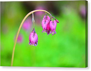 Forest Floor Canvas Print - Beautiful Hearts by Jeff Swan