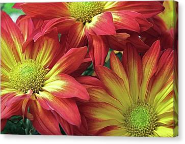 Canvas Print featuring the photograph Beautiful Trio by Allen Beatty
