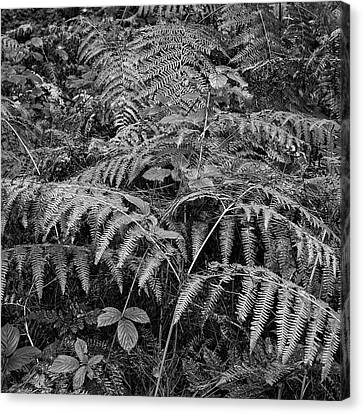 Beautifully Toned Black And White Landscape Of Woodland In Autum Canvas Print by Matthew Gibson