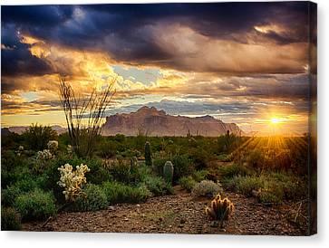 Beauty In The Desert Canvas Print by Saija Lehtonen