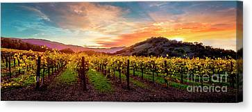 Grape Vines Canvas Print - Morning Sun Over The Vineyard by Jon Neidert