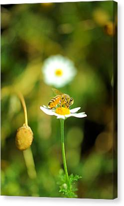 Bee On A Flower Canvas Print by Jeff Swan