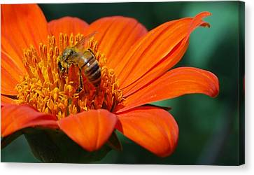 Bee-utiful Canvas Print by Debbie Karnes