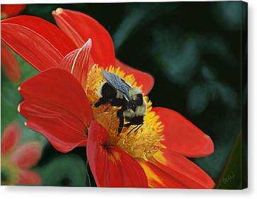 Beeutiful Canvas Print by Kevin Phipps