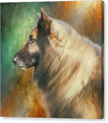 Working Dog Canvas Print - Belgian Tervuren Artwork by Wolf Shadow  Photography