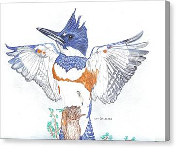 Belted Kingfisher Canvas Print by Don  Gallacher