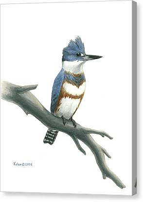Belted Kingfisher Perched Canvas Print by Kalen Malueg