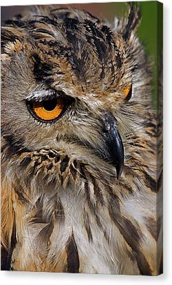 Canvas Print featuring the photograph Bengal Eagle Owl by JT Lewis