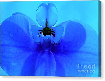 Beyond Blue Canvas Print by Krissy Katsimbras