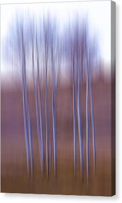 Birch  Canvas Print by Naman Imagery