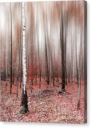 Canvas Print featuring the photograph Birchforest In Fall by Hannes Cmarits