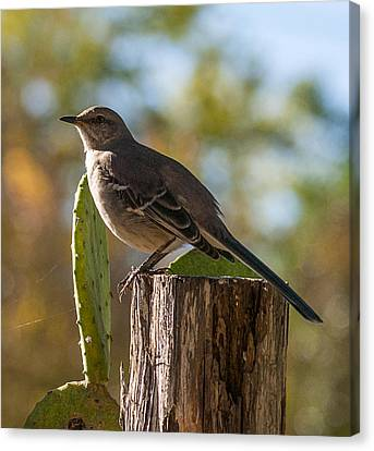 Bird On A Post Canvas Print