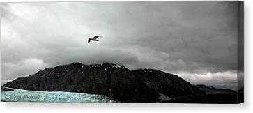 Canvas Print featuring the photograph Bird Over Glacier - Alaska by Madeline Ellis