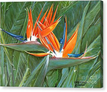 Birds Of Paradise Canvas Print