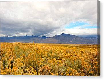 Bishop California  Canvas Print by Dung Ma