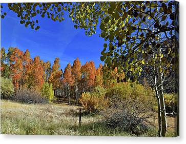Bishop Creek Canvas Print by Dung Ma