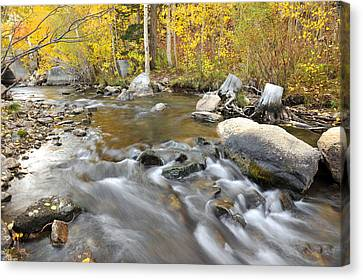 Bishop Creek In The Fall Canvas Print by Dung Ma