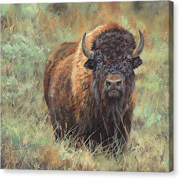 North American Wildlife Canvas Print - Bison by David Stribbling