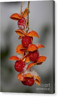 Bittersweet Berries Canvas Print by Kenneth M. Highfill
