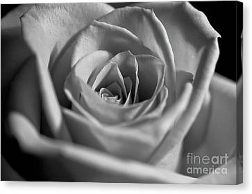 Canvas Print featuring the photograph Black And White Rose by Micah May