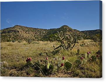 Black Mesa Cacti Canvas Print by Charles Warren