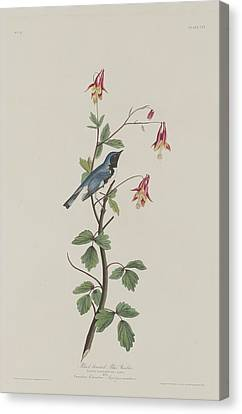 Wings Canvas Print - Black-throated Blue Warbler by Dreyer Wildlife Print Collections